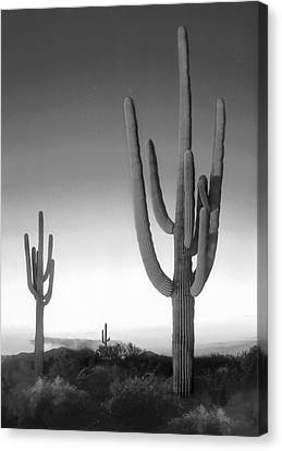 On The Border Canvas Print by Mike McGlothlen