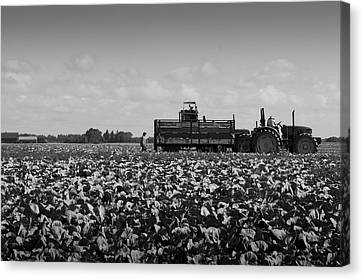 Canvas Print featuring the photograph On The Farm by Ricky L Jones