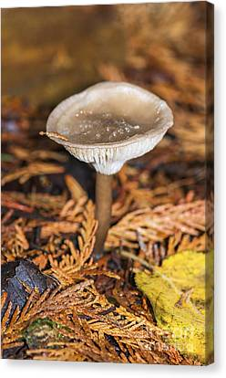 On The Forest Floor 2 Canvas Print by Sharon Talson