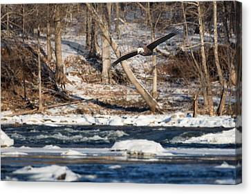 Eagle In Flight Canvas Print - On The Hunt by Bill Wakeley