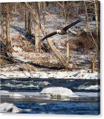 Eagle In Flight Canvas Print - On The Hunt Square by Bill Wakeley
