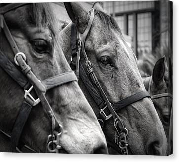 Horsepower Canvas Print - On The Job by Joan Carroll