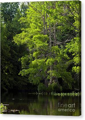 Canvas Print featuring the photograph On The Lake Two by Ken Frischkorn