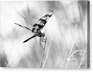 South Louisiana Canvas Print - On The Launch Pad by Scott Pellegrin