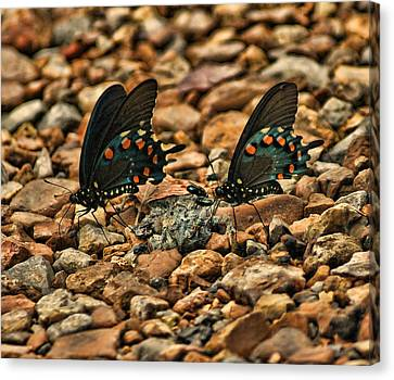 On The Rocks Canvas Print by Rick Friedle