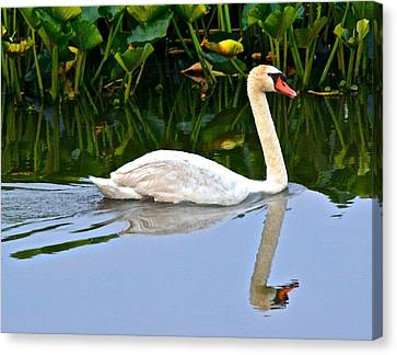 On The Swanny River Canvas Print by Frozen in Time Fine Art Photography