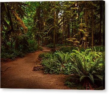 On The Trail To .... Canvas Print by Randy Hall