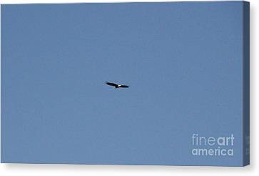 On The Wings Of A Eagle Canvas Print by Daniel Henning