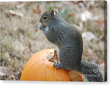 Canvas Print featuring the photograph On Top Of The Pumpkin by Mark McReynolds