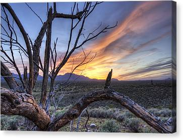 Canvas Print featuring the photograph Once Mesquite by Anthony Citro