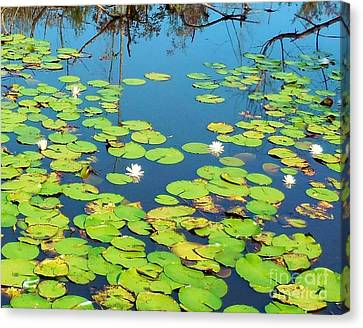 Once Upon A Lily Pad Canvas Print by Eloise Schneider