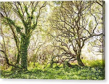 Oaks Canvas Print - Once Upon A Time by Jamie Pham