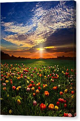 Red Leaf Canvas Print - Once Upon A Time by Phil Koch