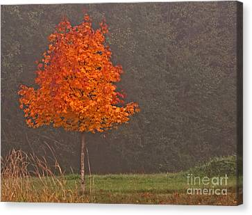 One Autumn Tree In Foggy Mist Art Prints Canvas Print