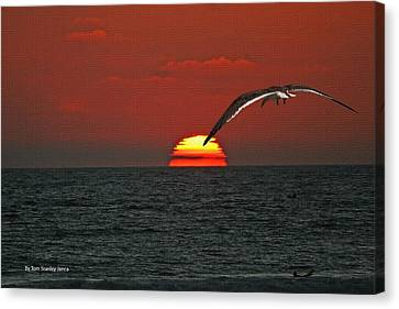 Canvas Print featuring the photograph One Black Skimmers At Sunset by Tom Janca