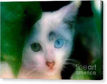 One Blue One Green Cat In New Olreans Canvas Print by Michael Hoard