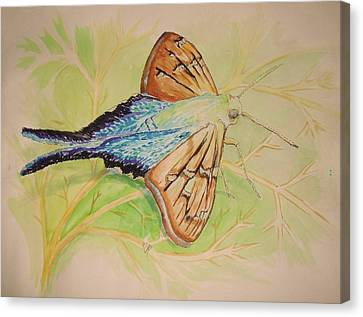 One Day In A Long-tailed Skipper Moth's Life Canvas Print