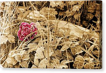 One Day Canvas Print by Jordan Blackstone