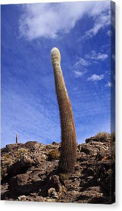One Enormous Cactus Canvas Print by Lana Enderle