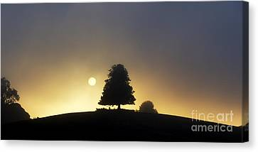 One Foggy Morning Canvas Print by Tim Gainey
