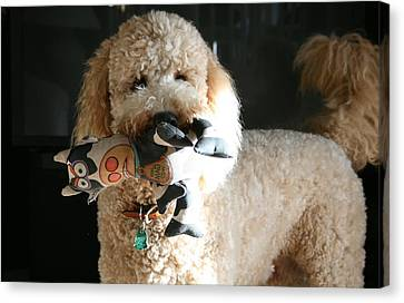 One Happy Labradoodle Canvas Print by Horst Duesterwald