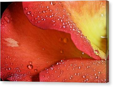 One In Ten Thousand  Canvas Print by JC Findley