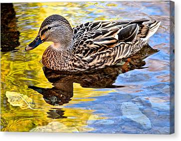 One Leaf Two Ducks Canvas Print