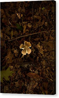 Canvas Print featuring the photograph One Little Mushroom by Lena Wilhite