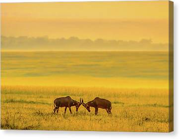 One On One Canvas Print