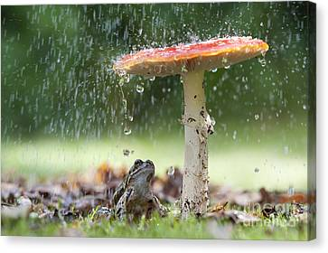 Water Drops Canvas Print - One Rainy Day by Tim Gainey