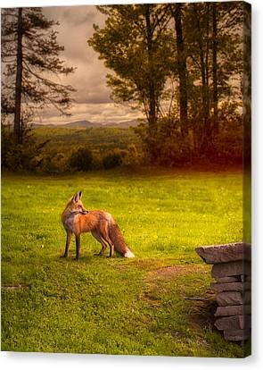 One Red Fox Canvas Print by Bob Orsillo