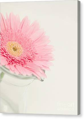 One Single Drop Canvas Print by Kay Pickens