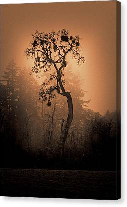 One Stands Alone Canvas Print by Dale Stillman
