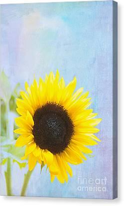 One Sunflower Canvas Print