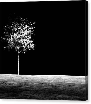 One Tree Hill Canvas Print by Darryl Dalton