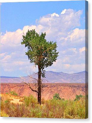 Canvas Print featuring the photograph One Tree by Marilyn Diaz