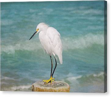 One With Nature - Snowy Egret Canvas Print