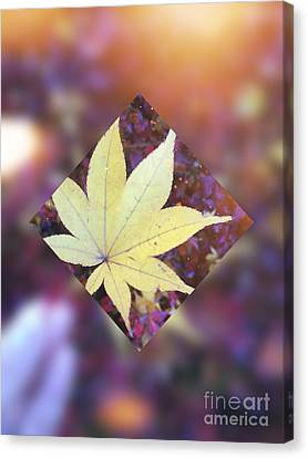 One Yellow Maple Leaf Canvas Print by Beverly Claire Kaiya