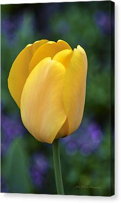 One Yellow Tulip Canvas Print by Julie Palencia
