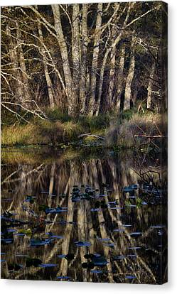 O'neil Lake Canvas Print by Robert Woodward