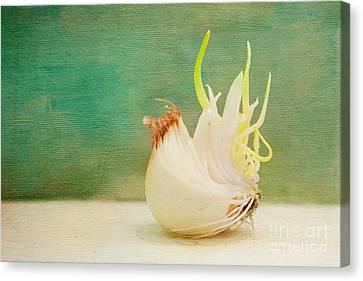 Onion Bird Canvas Print by Kay Pickens