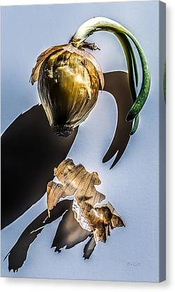 Onion Skin And Shadow Canvas Print by Bob Orsillo