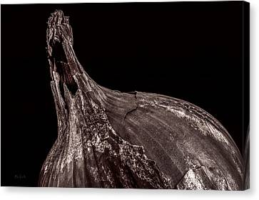 Onion Skin Canvas Print by Bob Orsillo