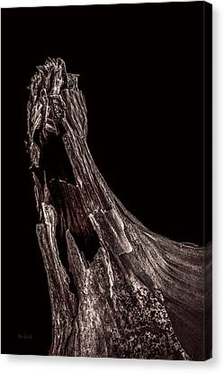 Onion Skin Two Canvas Print by Bob Orsillo