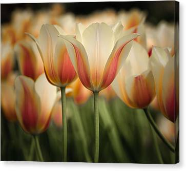 Only Tulips Canvas Print by James Barber