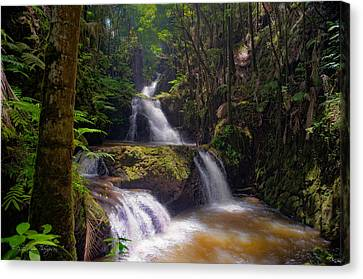 Canvas Print featuring the photograph Onomea Falls by Jim Thompson