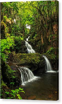 Onomea Falls Canvas Print by James Eddy