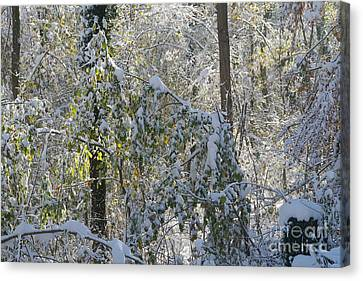 Onset Of Winter 2 Canvas Print by Rudi Prott