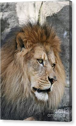 Canvas Print featuring the photograph Onyo #4 by Judy Whitton