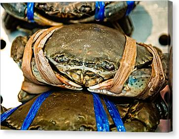 Blue Claw Crab Canvas Print - Ooh Crab by Dean Harte